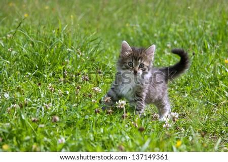 Kitten on a grass - stock photo