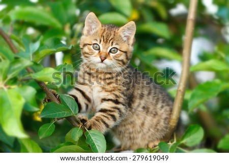 Kitten on a tree - stock photo