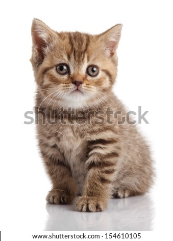 kitten on a white background - stock photo