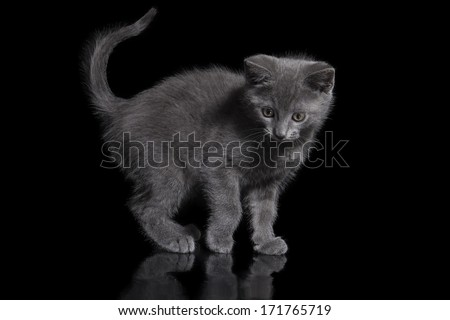 kitten on black background
