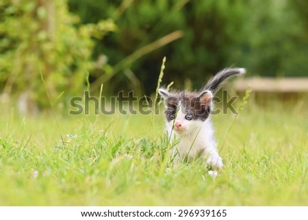 Kitten on grass. Beautiful small kitten with blue eyes playing at home on grass. - stock photo