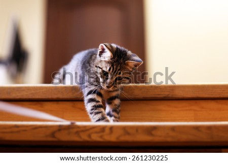 Kitten on staircase, indoors - stock photo