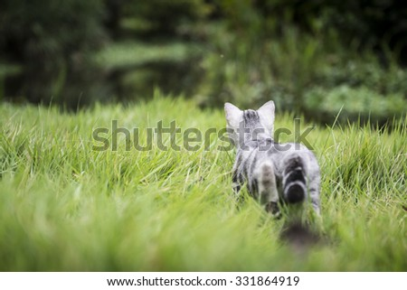 Kitten on the grass in the back