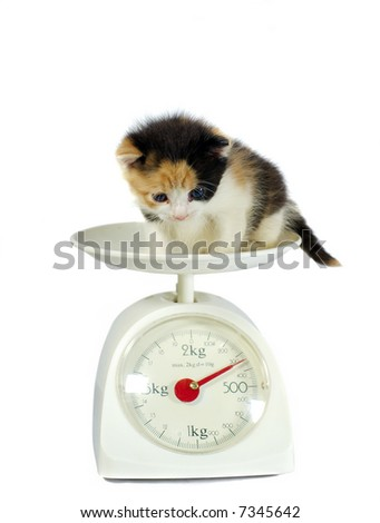 kitten on the scales isolated on white - stock photo