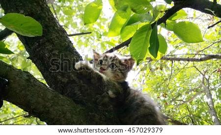 kitten on the tree - stock photo
