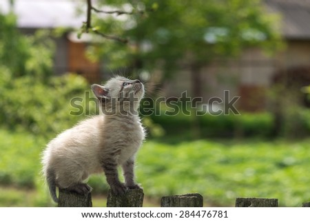 kitten on wooden fence close up - stock photo