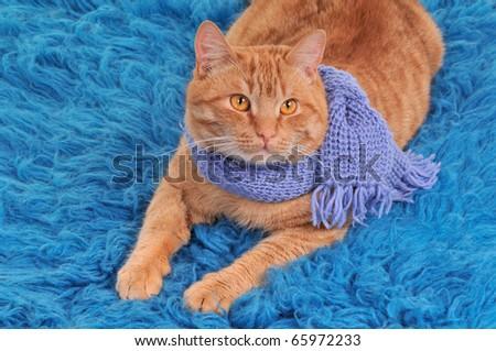 Kitten on woolen carpet wearing woolen scarf - stock photo