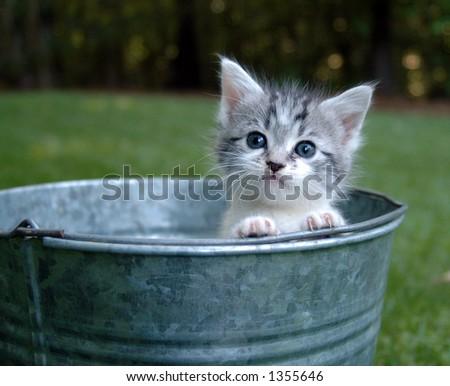 Kitten peeking out of a bucket - stock photo