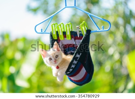 kitten playful in Knit cap hanging - stock photo