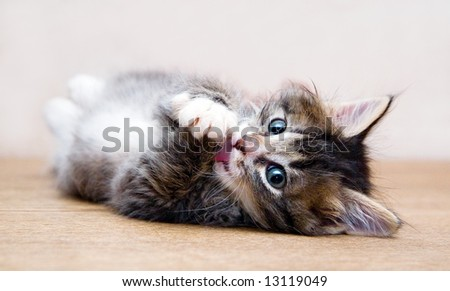 Kitten playing at the table at home and looking at photographer (series Animals) - stock photo