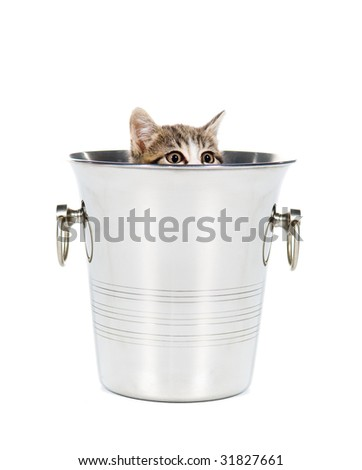 Kitten playing hide and seek in a champagne bucket - stock photo