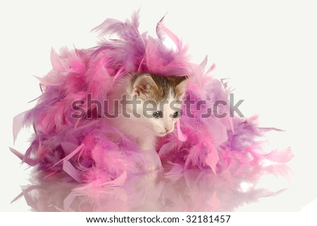 kitten playing in pink feathers isolated on white background