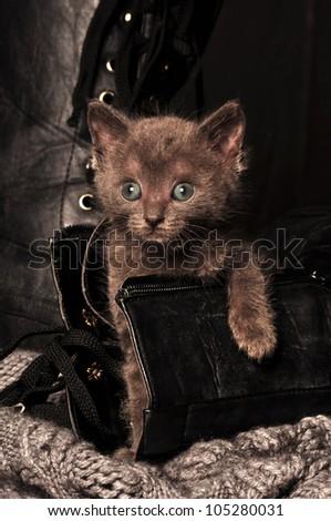 kitten playing in shoe - stock photo