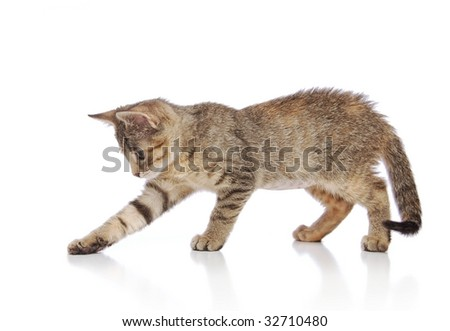 Kitten Playing on White Background - stock photo