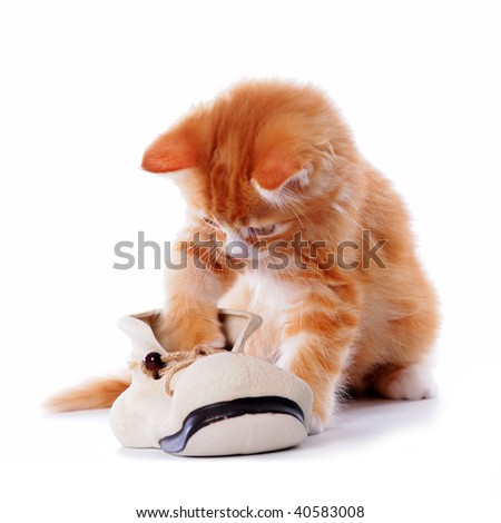 Kitten playing with a boot isolated on white - stock photo