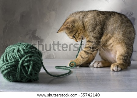 kitten playing with a green wool ball on a marble surface and gray background - stock photo