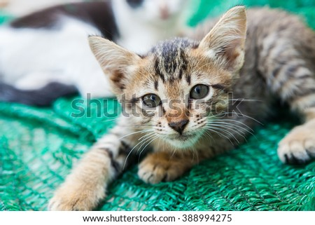 Kitten playing with a mesh that was put aside. - stock photo
