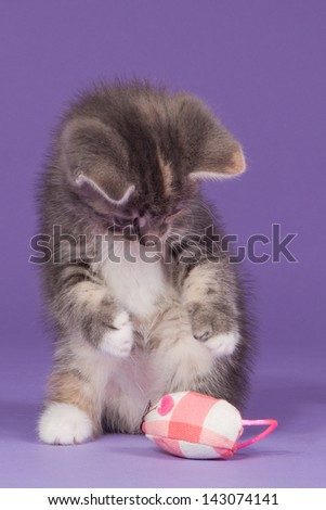 Kitten playing with a pink toy mouse - stock photo