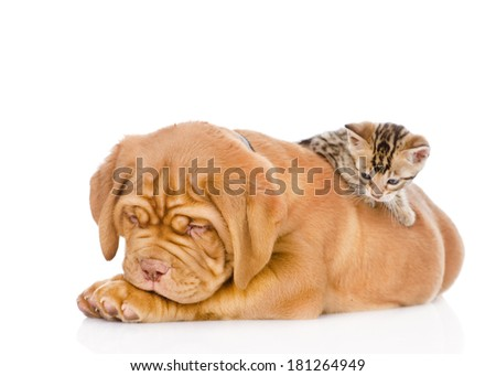 kitten playing with a puppy. isolated on white background