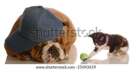 kitten playing with ball beside puppy that is sleeping - stock photo