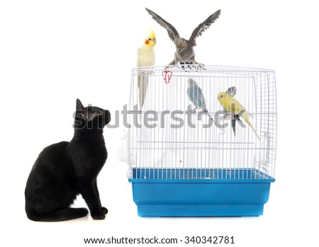 kitten playing with bird in front of white background - stock photo