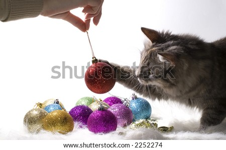 Kitten playing with Christmas ornaments - stock photo