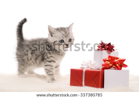 kitten playing with gift box of red and white