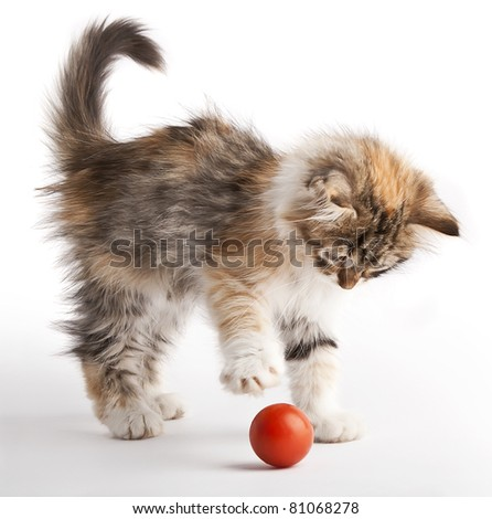 Kitten playing with red ball - stock photo