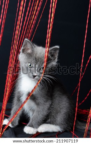 Kitten playing with string on an isolated black background - stock photo