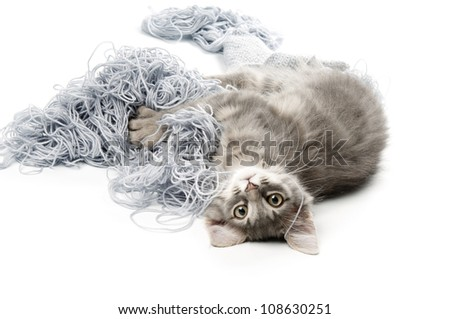 Kitten  playing with yarn - stock photo