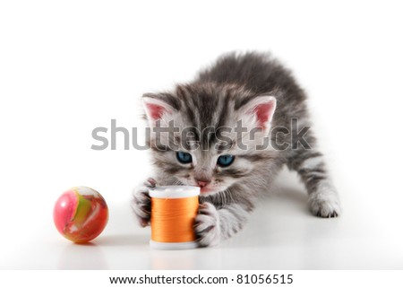Kitten plays with a bobbin and ball - Isolated on white background - stock photo