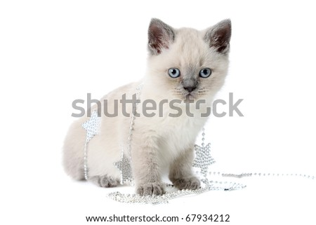 kitten plays with a New Year's garland, on a white background is isolated.
