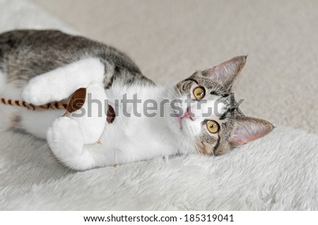 Kitten Plays with Stuffed Mouse - stock photo