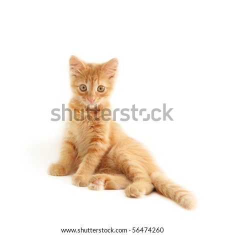 kitten red funny isolated on white background - stock photo