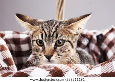 Kitten rest in plaid, closeup - stock photo