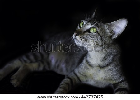 Kitten, resting cat on a floor in color black background, cute funny cat at home, domestic cat, low key - stock photo