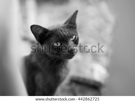 Kitten, resting cat on a floor in colorful blur background, cute funny cat close up, young playful cat at home, domestic cat, cat resting, cat playing at home, elegant cat, black and white tone - stock photo