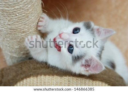 Kitten sharpening its claws on the scratching post