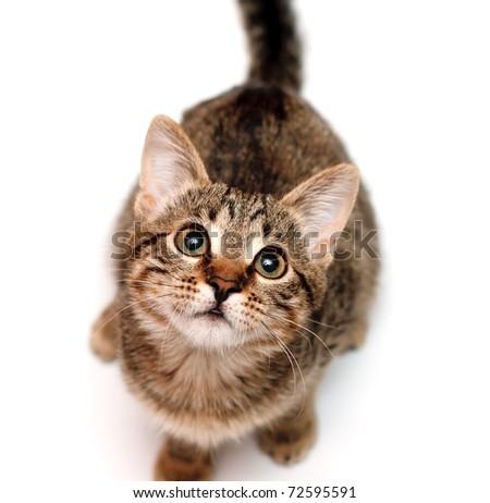 Kitten sits and looks upwards on white background - stock photo