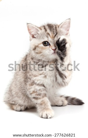 Kitten sitting and lifted a paw (isolated on white)