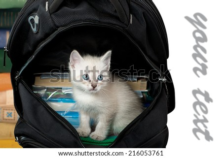 kitten sitting in a school backpack.  isolated. - stock photo