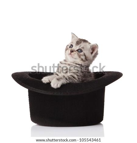 kitten sitting in hat. little kitten on white background. - stock photo