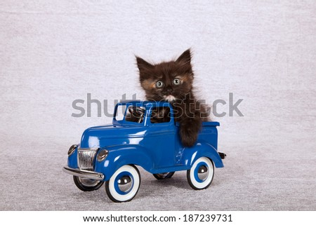Kitten sitting inside blue toy truck car on silver background - stock photo