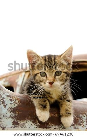 kitten sitting on a rusty old car - stock photo