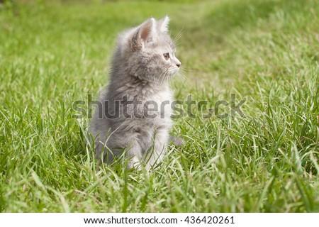 kitten sitting on the grass - stock photo