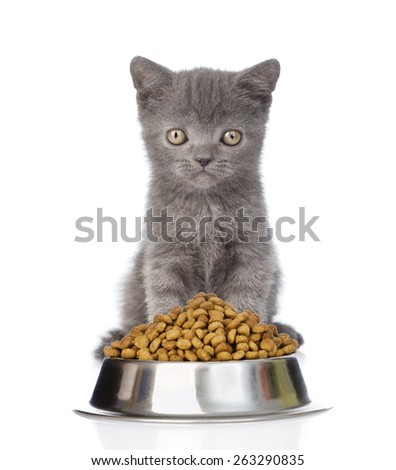 kitten sitting with a bowl of dry cat food. isolated on white background - stock photo