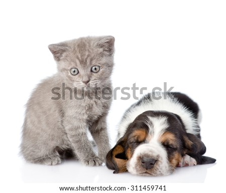kitten sitting with sleeping basset hound puppy. isolated on white background - stock photo