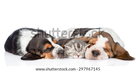 kitten sleep with two basset hound puppies. isolated on white background - stock photo