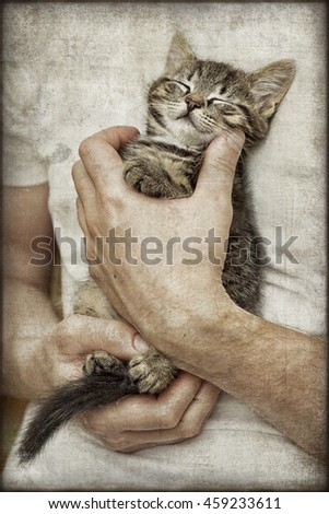 Kitten Sleeping in Hands - stock photo