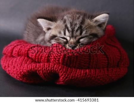 kitten sleeping in hat  - stock photo